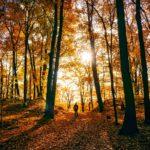 自然的紓壓療法「森林浴」